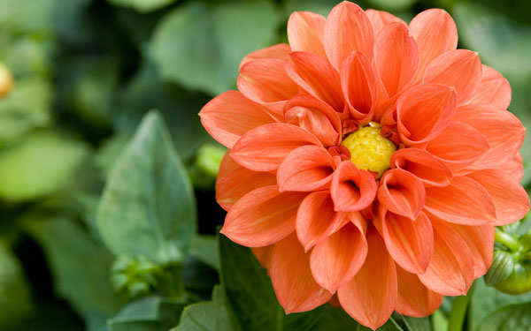 bright orange flower for your home design's perfect garden space