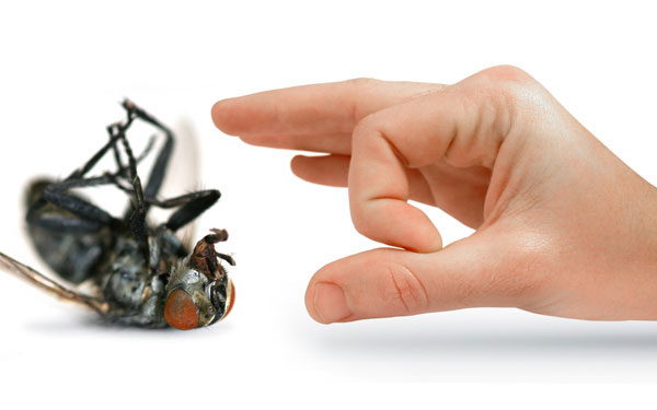 household pest being flicked by finger
