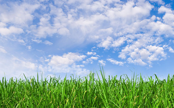 bright green grass and blue sky