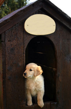 puppy in doghouse