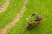 thumbnail image of wheelbarrow on green lawn