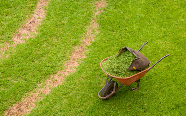 wheelbarrow with grass clippings